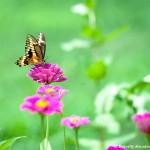 001 Butterflies Photo Album-BMIF