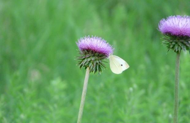 002 Butterflies Photo Album-BMIF