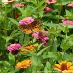 003 Butterflies Photo Album-BMIF