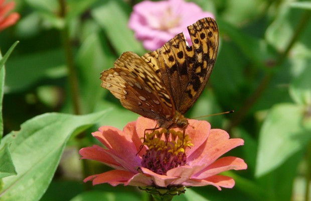 004 Butterflies Photo Album-BMIF