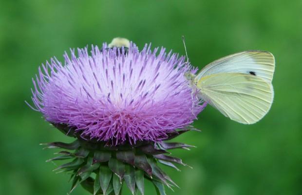 005 Butterflies Photo Album-BMIF
