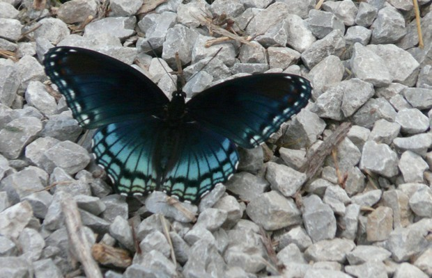 006 Butterflies Photo Album-BMIF