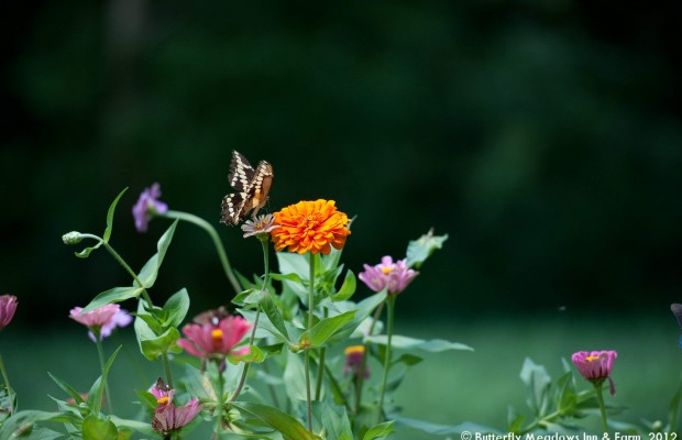 007 Butterflies Photo Album-BMIF