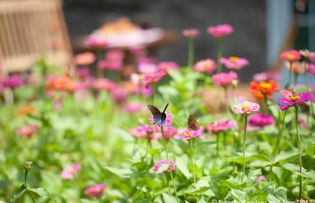 008 Butterflies Photo Album-BMIF