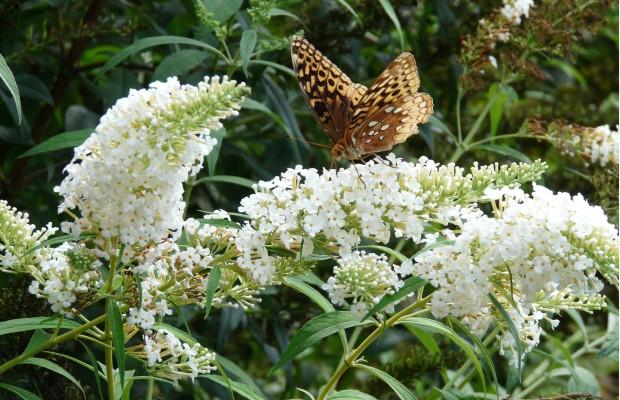 009 Butterflies Photo Album-BMIF