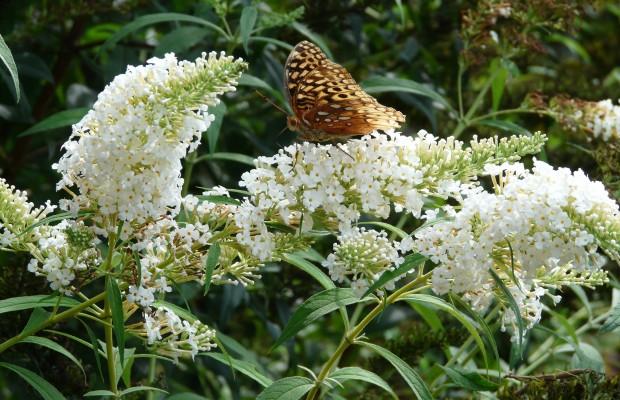 010 Butterflies Photo Album-BMIF
