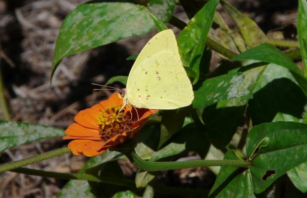 011 Butterflies Photo Album-BMIF