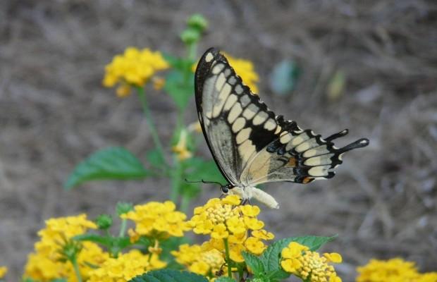 014 Butterflies Photo Album-BMIF