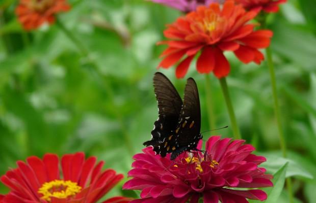 015 Butterflies Photo Album-BMIF