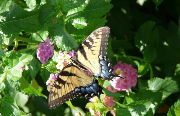 016 Butterflies Photo Album-BMIF