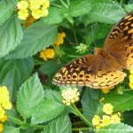 017 Butterflies Photo Album-BMIF