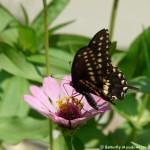 018 Butterflies Photo Album-BMIF