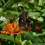 020 Butterflies Photo Album-BMIF