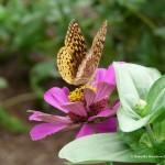 021 Butterflies Photo Album-BMIF