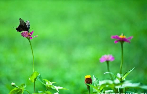 022 Butterflies Photo Album-BMIF